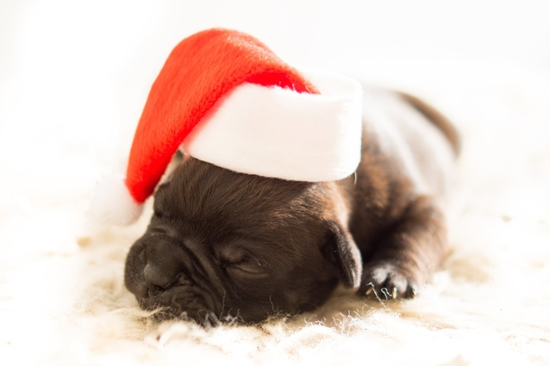 10 Adorable Christmas Doggy Pictures