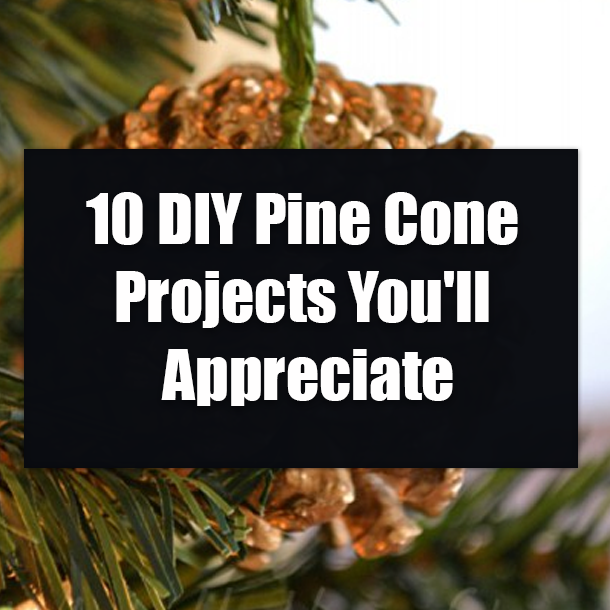 10 Diy Pine Cone Projects You Ll Appreciate