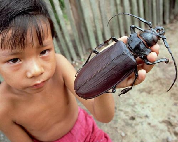10-Of-The-Creepiest-And-Largest-Insects-