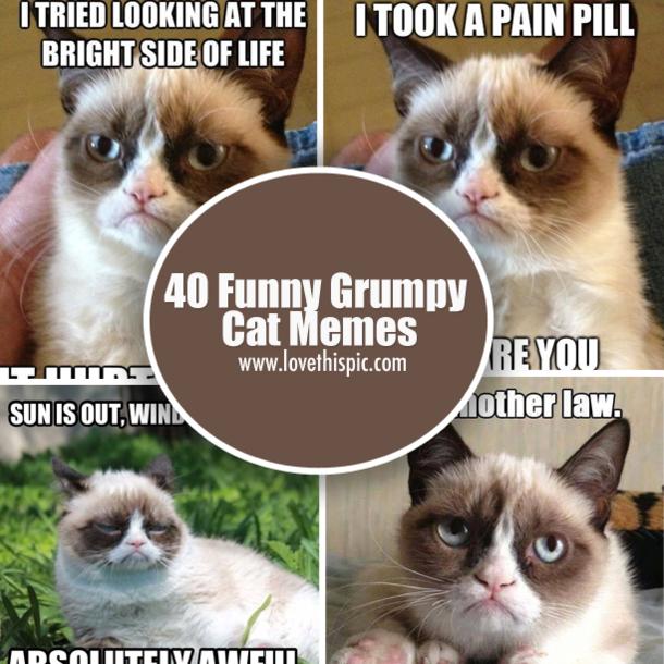 Funny Grumpy Cat Christmas Memes.40 Funny Grumpy Cat Memes