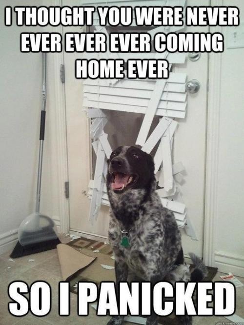 20 Hilarious Animal Memes