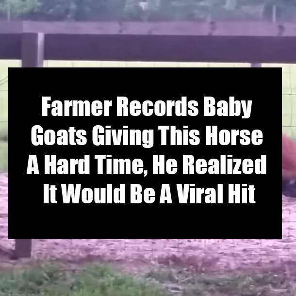 Farmer Records Baby Goats Giving This Horse A Hard Time, He
