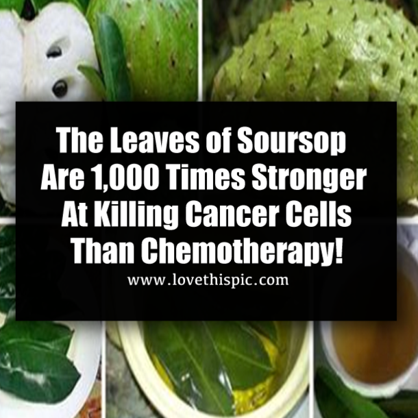 The Leaves of Soursop Are 1,000 Times Stronger At Killing